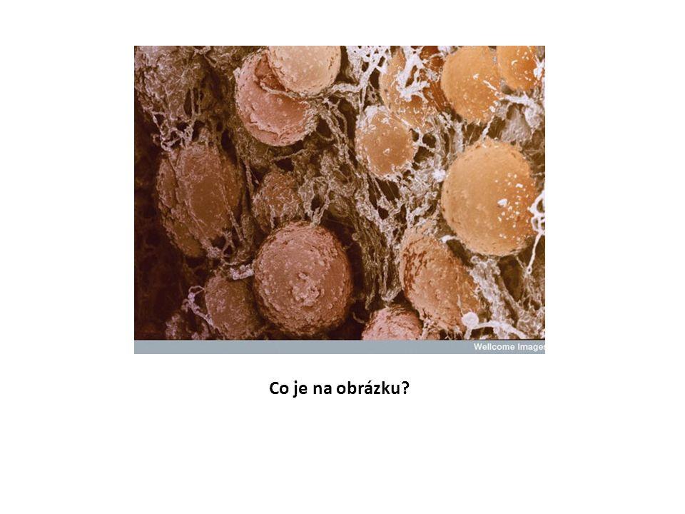 Tukové buňky
