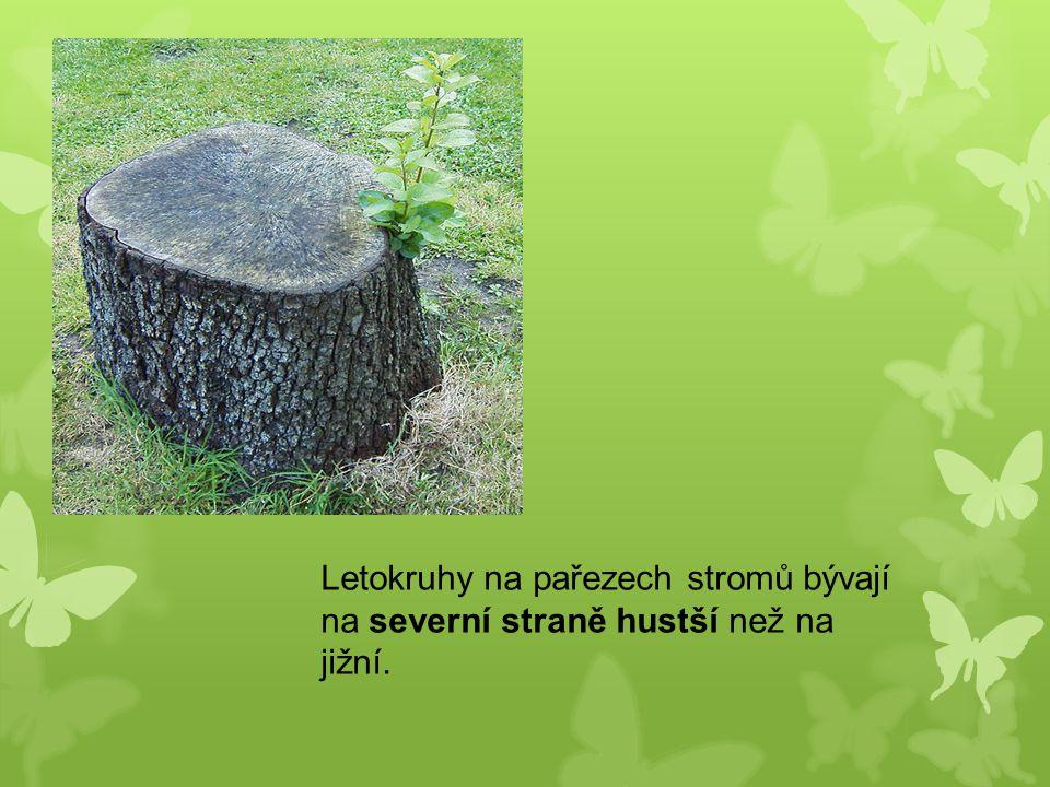 Letokruhy na pařezech stromů bývají na severní straně hustší než na jižní.