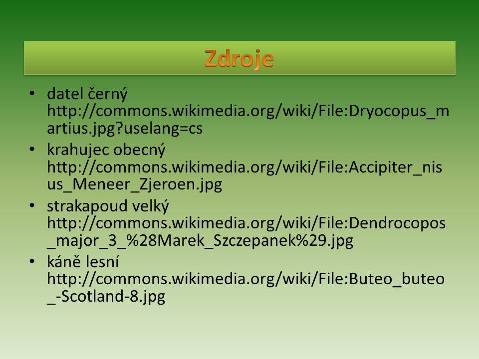 • datel černý http://commons.wikimedia.org/wiki/File:Dryocopus_m artius.jpg?uselang=cs • krahujec obecný http://commons.wikimedia.org/wiki/File:Accipi