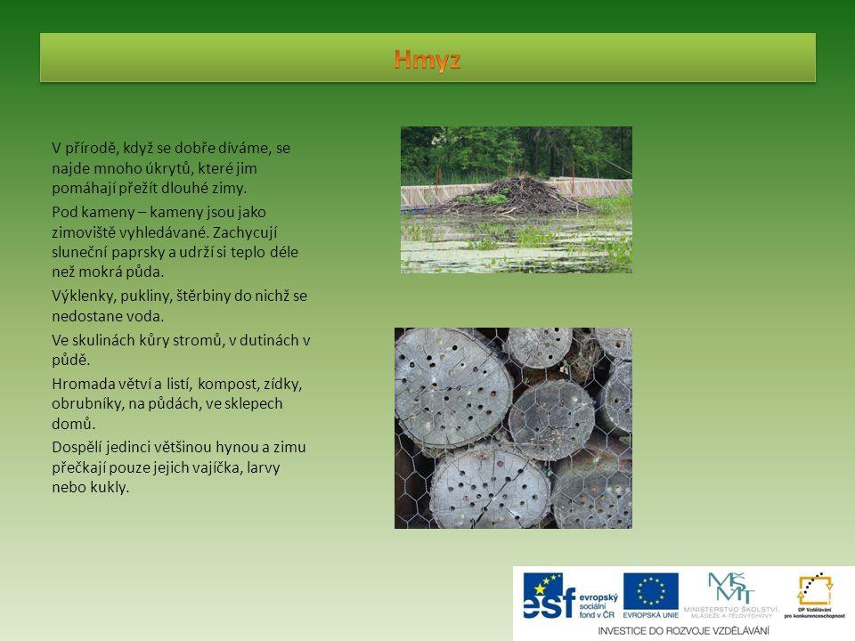 V přírodě, když se dobře díváme, se najde mnoho úkrytů, které jim pomáhají přežít dlouhé zimy. Pod kameny – kameny jsou jako zimoviště vyhledávané. Za