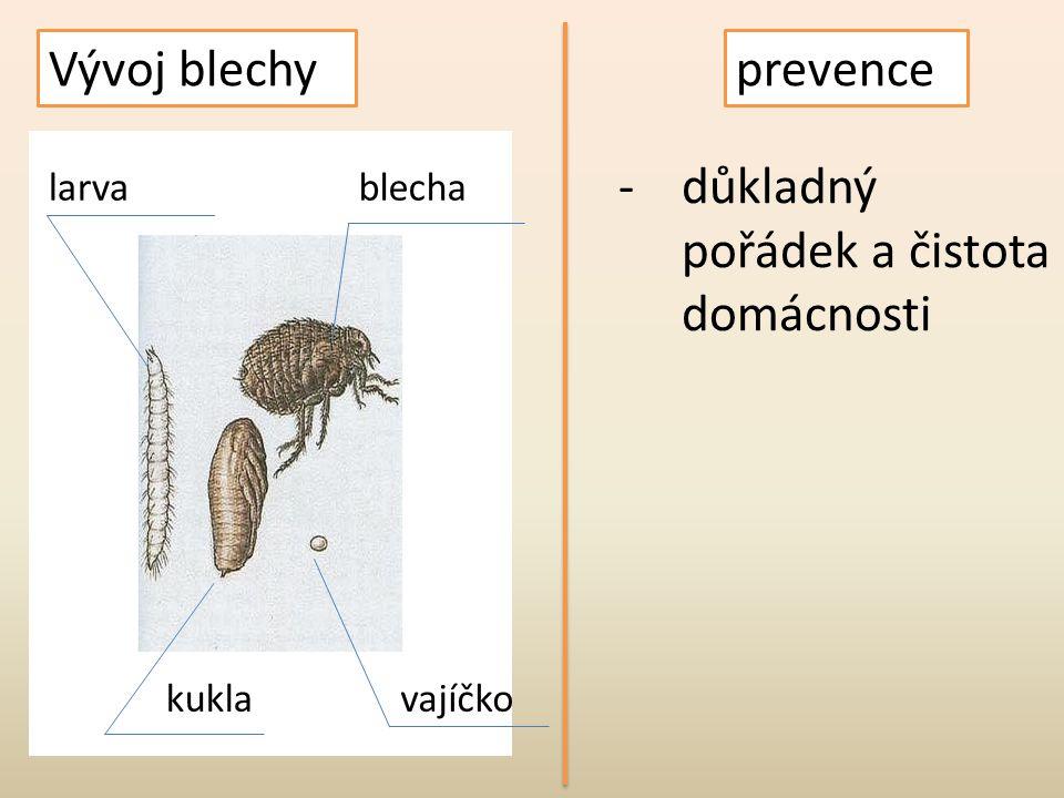Vývoj blechy larvablecha kuklavajíčko prevence -důkladný pořádek a čistota domácnosti