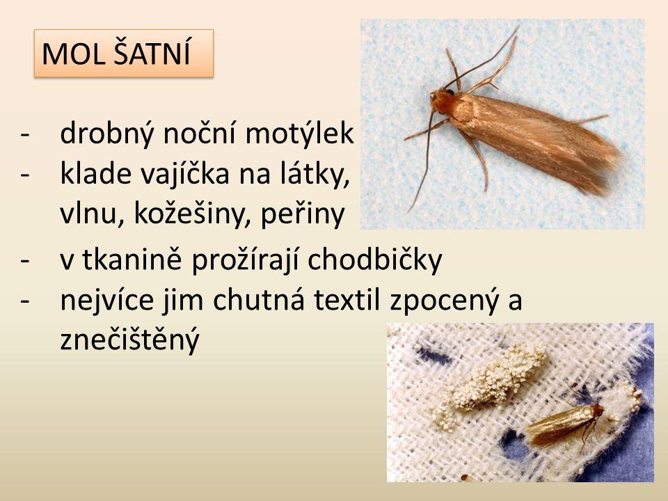 MOL ŠATNÍ -drobný noční motýlek -klade vajíčka na látky, vlnu, kožešiny, peřiny -v tkanině prožírají chodbičky -nejvíce jim chutná textil zpocený a zn