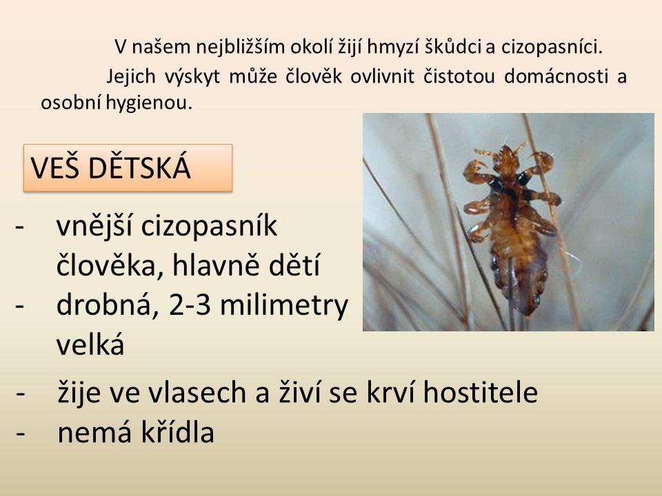V našem nejbližším okolí žijí hmyzí škůdci a cizopasníci. Jejich výskyt může člověk ovlivnit čistotou domácnosti a osobní hygienou. VEŠ DĚTSKÁ -vnější