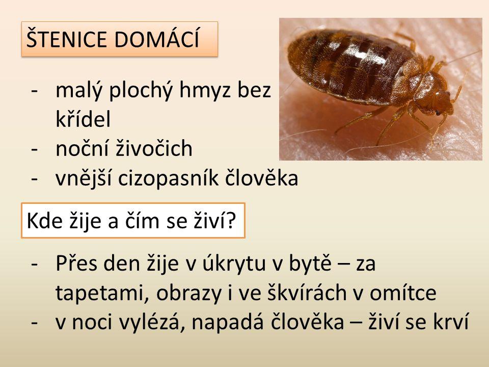ŠTENICE DOMÁCÍ -malý plochý hmyz bez křídel -noční živočich -vnější cizopasník člověka Kde žije a čím se živí? -Přes den žije v úkrytu v bytě – za tap