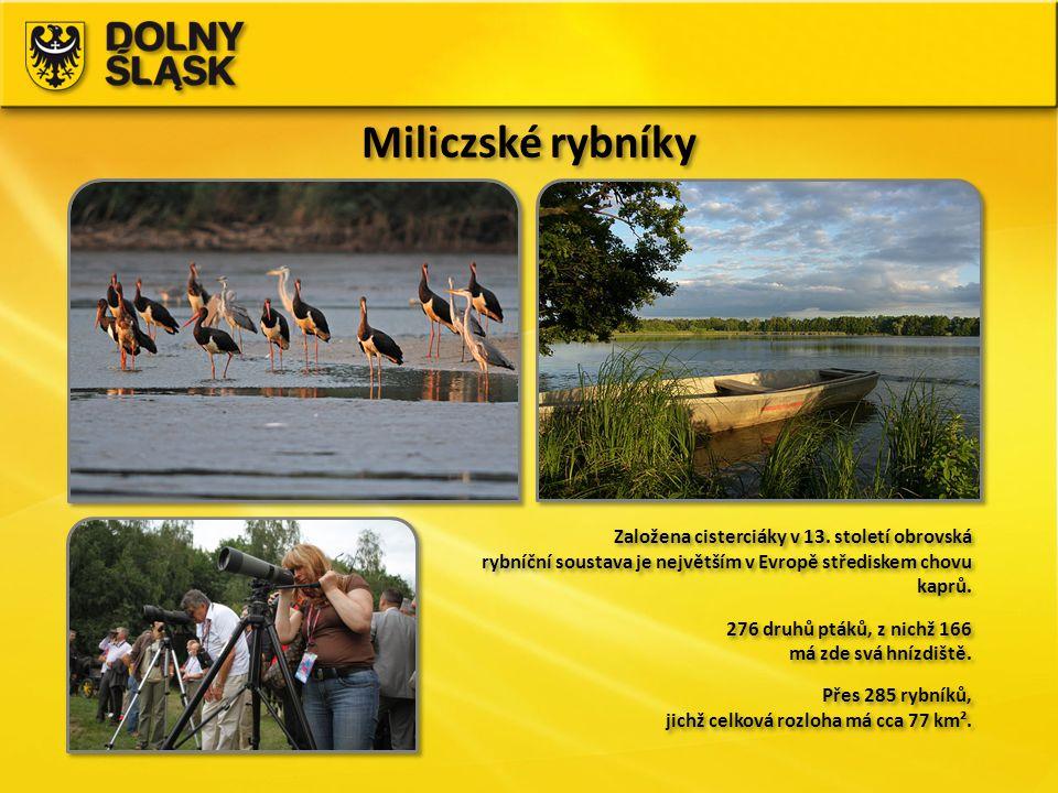 Miliczské rybníky Založena cisterciáky v 13. století obrovská rybníční soustava je největším v Evropě střediskem chovu kaprů. 276 druhů ptáků, z nichž