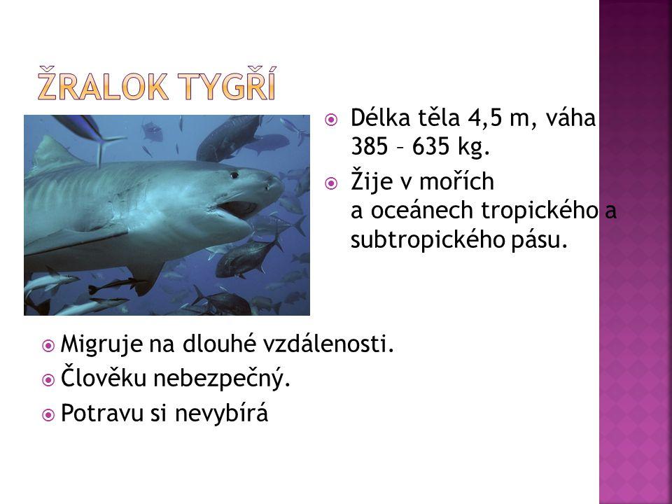  Délka těla 4,5 m, váha 385 – 635 kg.  Žije v mořích a oceánech tropického a subtropického pásu.  Migruje na dlouhé vzdálenosti.  Člověku nebezpeč