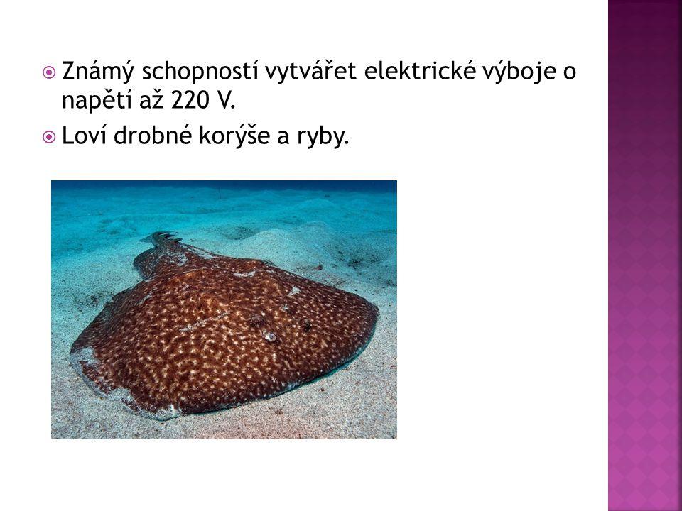  Známý schopností vytvářet elektrické výboje o napětí až 220 V.  Loví drobné korýše a ryby.