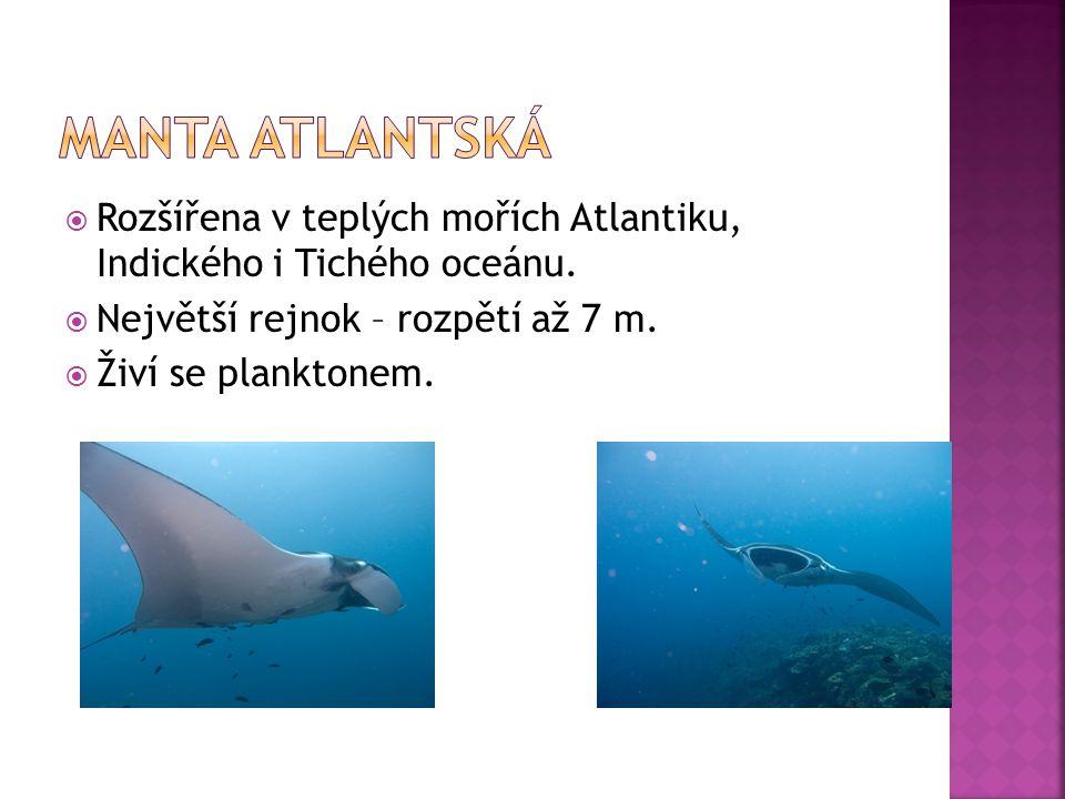  Rozšířena v teplých mořích Atlantiku, Indického i Tichého oceánu.  Největší rejnok – rozpětí až 7 m.  Živí se planktonem.
