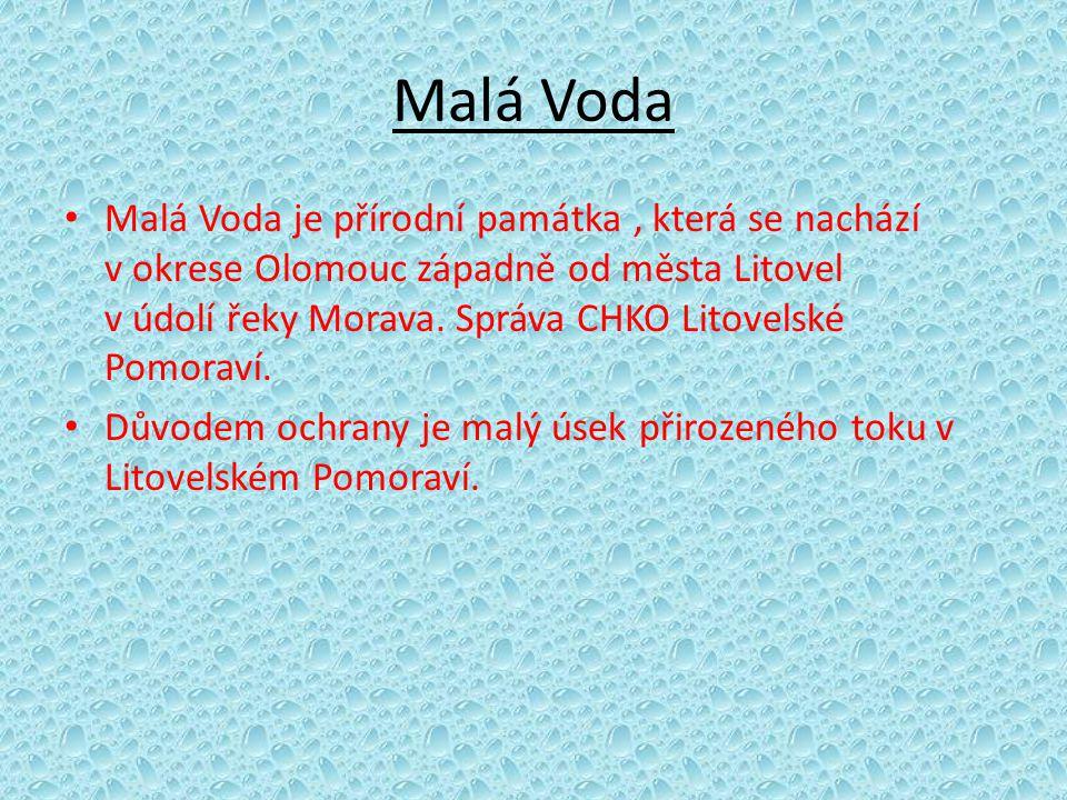 Malá Voda • Malá Voda je přírodní památka, která se nachází v okrese Olomouc západně od města Litovel v údolí řeky Morava. Správa CHKO Litovelské Pomo