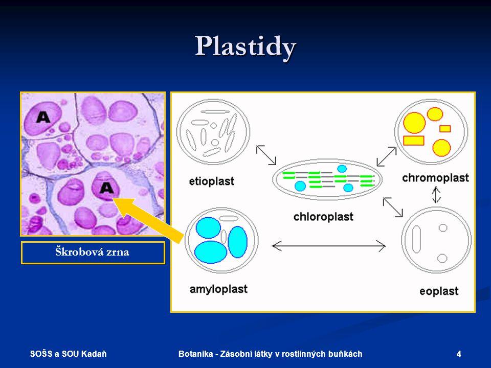 SOŠS a SOU Kadaň 4Botanika - Zásobní látky v rostlinných buňkách Plastidy Škrobová zrna