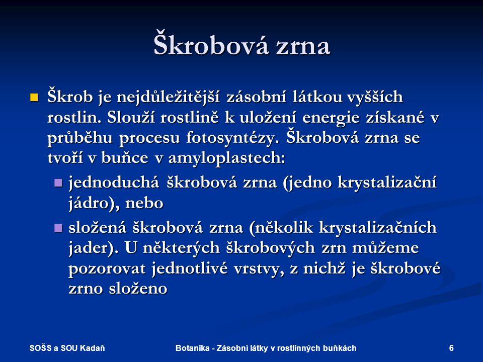 SOŠS a SOU Kadaň 6Botanika - Zásobní látky v rostlinných buňkách Škrobová zrna  Škrob je nejdůležitější zásobní látkou vyšších rostlin.