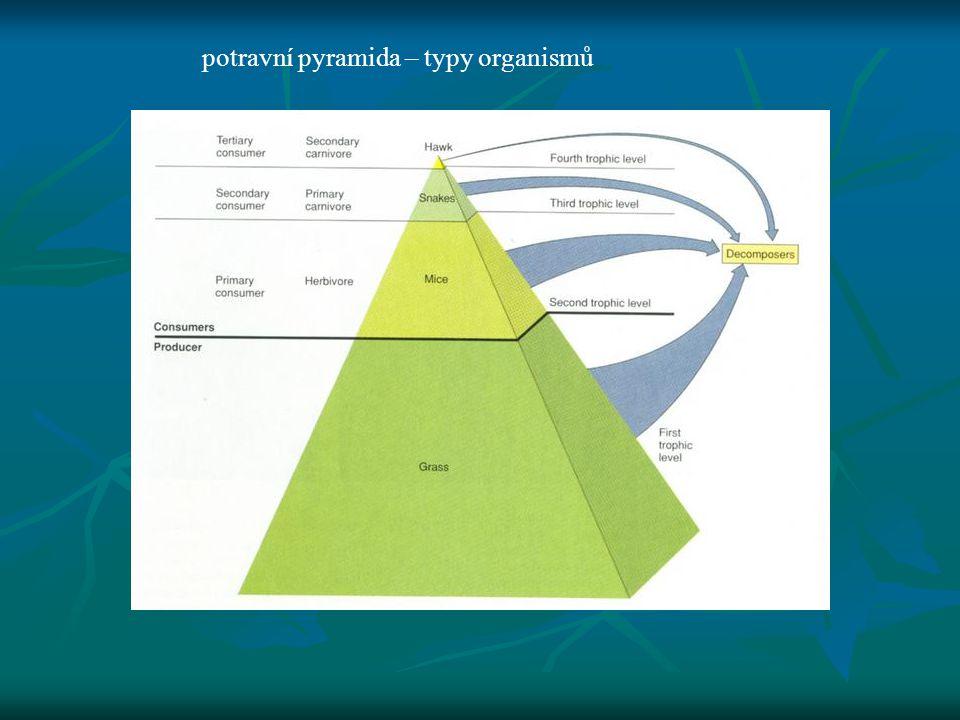 potravní pyramida – typy organismů