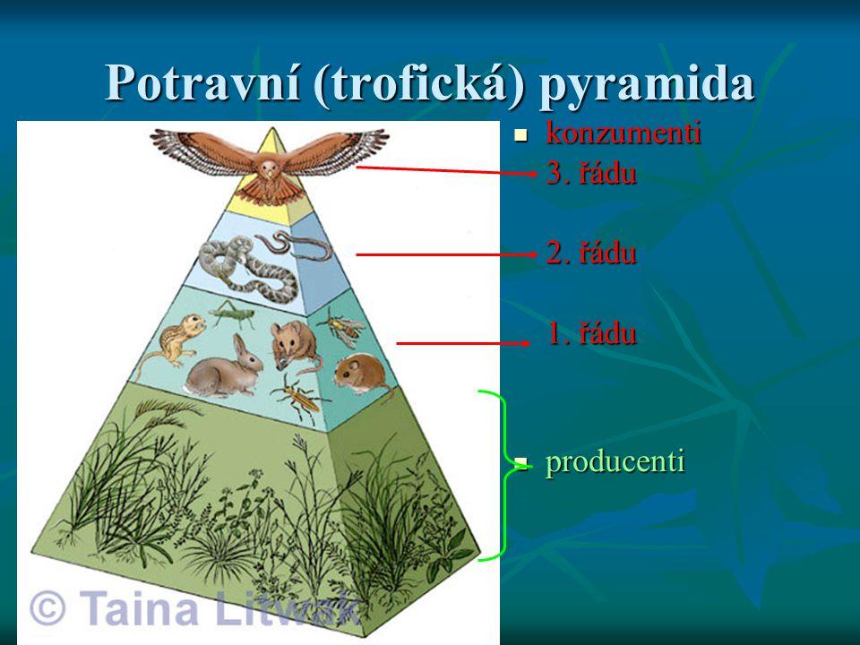 Potravní (trofická) pyramida  konzumenti 3. řádu 2. řádu 1. řádu  producenti