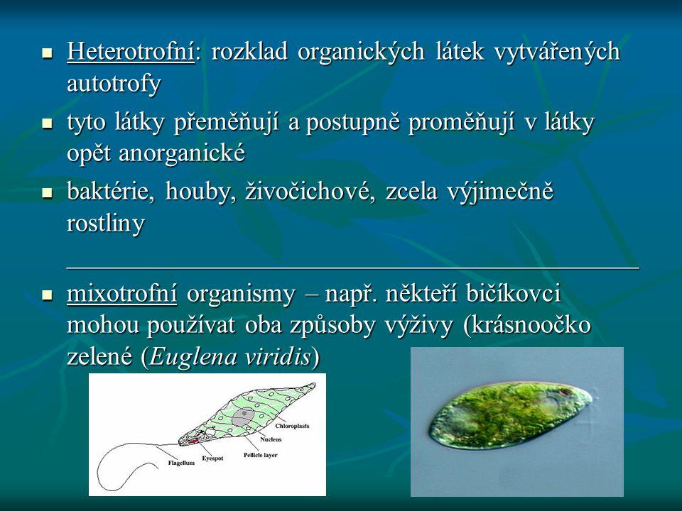  Heterotrofní: rozklad organických látek vytvářených autotrofy  tyto látky přeměňují a postupně proměňují v látky opět anorganické  baktérie, houby
