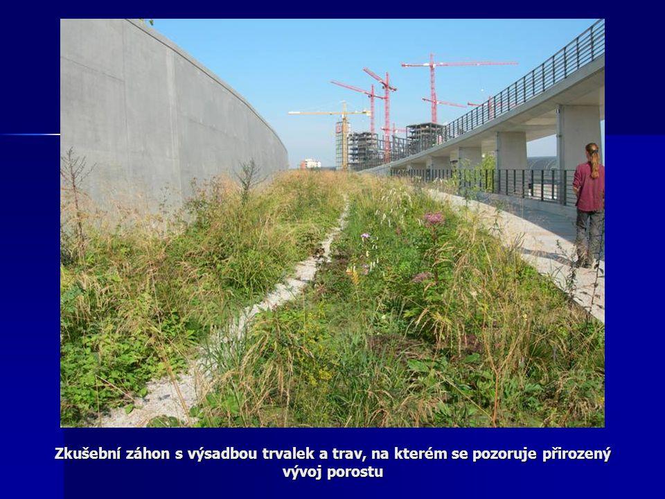 Zkušební záhon s výsadbou trvalek a trav, na kterém se pozoruje přirozený vývoj porostu