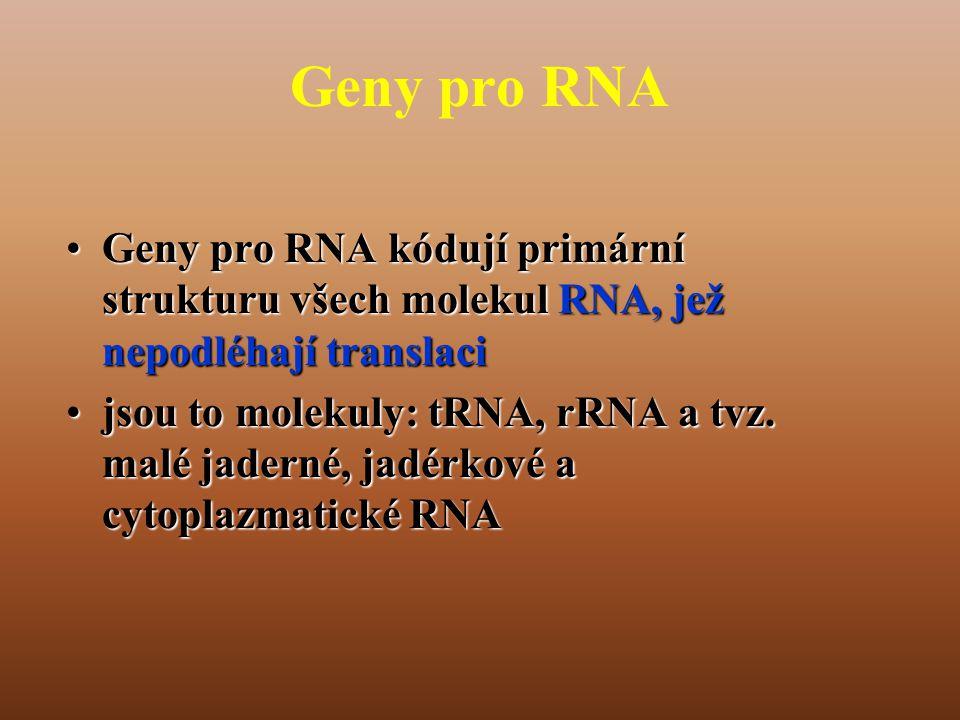 Geny pro RNA •Geny pro RNA kódují primární strukturu všech molekul RNA, jež nepodléhají translaci •jsou to molekuly: tRNA, rRNA a tvz.