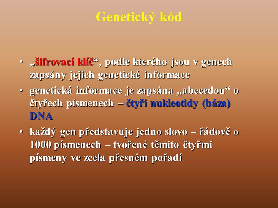 """Genetický kód •""""šifrovací klíč , podle kterého jsou v genech zapsány jejich genetické informace •genetická informace je zapsána """"abecedou o čtyřech písmenech – čtyři nukleotidy (báza) DNA •každý gen představuje jedno slovo – řádově o 1000 písmenech – tvořené těmito čtyřmi písmeny ve zcela přesném pořadí"""