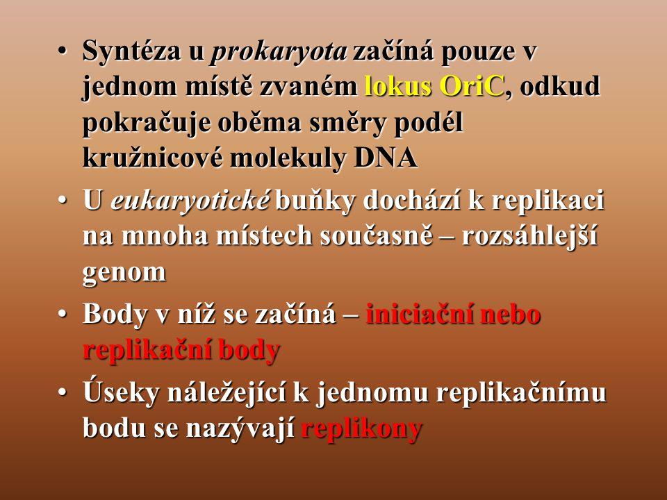 •Syntéza u prokaryota začíná pouze v jednom místě zvaném lokus OriC, odkud pokračuje oběma směry podél kružnicové molekuly DNA •U eukaryotické buňky dochází k replikaci na mnoha místech současně – rozsáhlejší genom •Body v níž se začíná – iniciační nebo replikační body •Úseky náležející k jednomu replikačnímu bodu se nazývají replikony