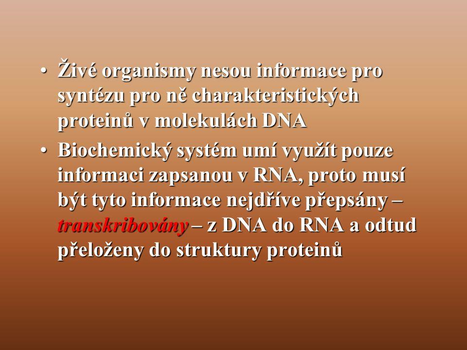 •Živé organismy nesou informace pro syntézu pro ně charakteristických proteinů v molekulách DNA •Biochemický systém umí využít pouze informaci zapsanou v RNA, proto musí být tyto informace nejdříve přepsány – transkribovány – z DNA do RNA a odtud přeloženy do struktury proteinů