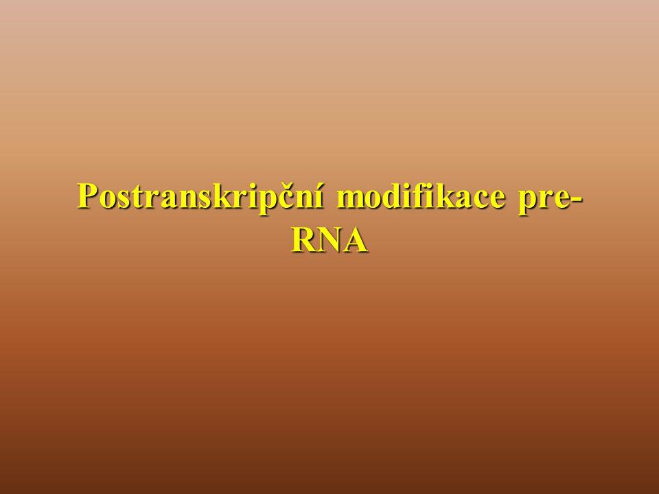 Postranskripční modifikace pre- RNA