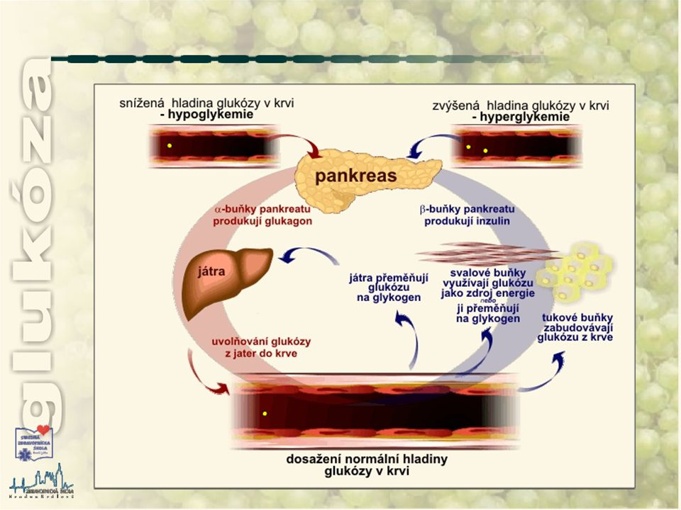 poruchy v metabolizmu glukózy glykemie, glukozemie, glukoplazmie - hladina glukózy v krvi glykosurie - přítomnost glukózy v moči porucha v metabolizmu se může projevit ve smyslu: trvalého zvýšení  hladiny glukózy - hyperglykemie za hyperglykemii považujeme stavy, kdy koncentrace glukózy na lačno je vyšší než horní hranice referenčního intervalu nebo snížení  hladiny glukózy - hypoglykemie hypoglykemie je vážný stav, kdy koncentrace glukózy v krvi klesne pod dolní hranici referenčního intervalu, tj.