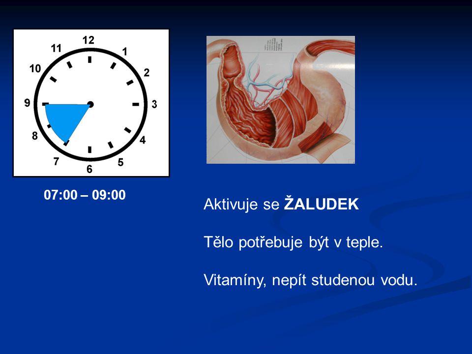 Aktivuje se ŽALUDEK Tělo potřebuje být v teple. Vitamíny, nepít studenou vodu. 07:00 – 09:00