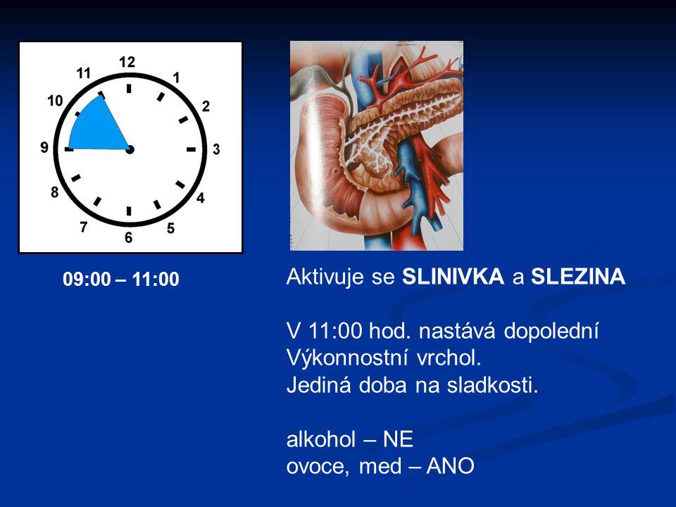 Aktivuje se SLINIVKA a SLEZINA V 11:00 hod. nastává dopolední Výkonnostní vrchol. Jediná doba na sladkosti. alkohol – NE ovoce, med – ANO 09:00 – 11:0