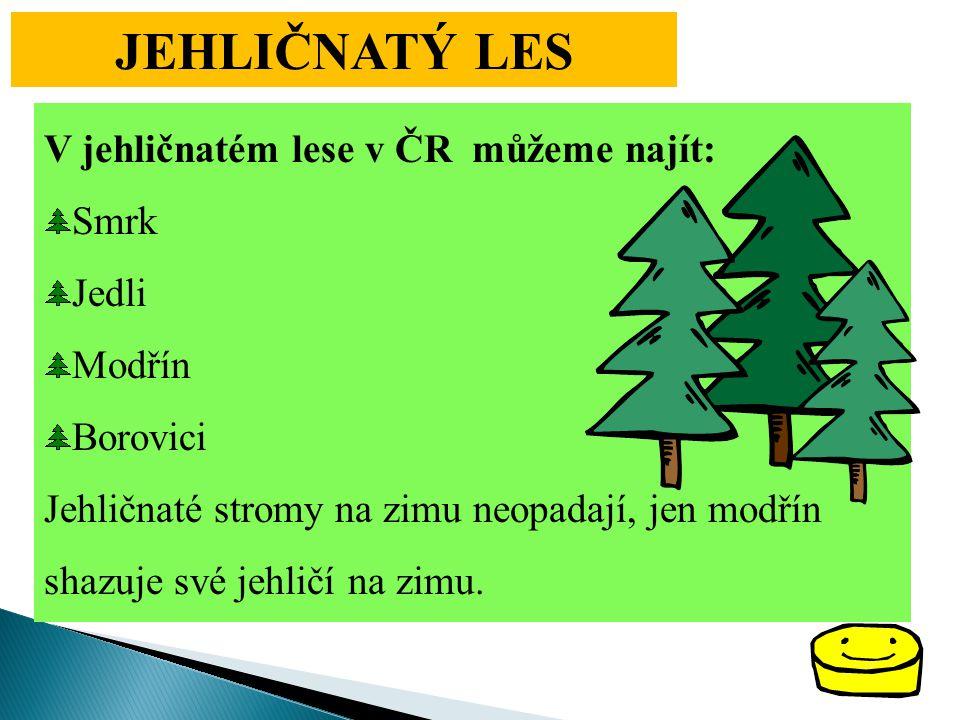 JEHLIČNATÝ LES V jehličnatém lese v ČR můžeme najít: Smrk Jedli Modřín Borovici Jehličnaté stromy na zimu neopadají, jen modřín shazuje své jehličí na zimu.