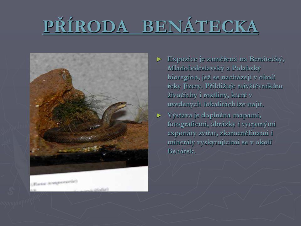 PŘÍRODA BENÁTECKA ► Expozice je zaměřená na Benátecký, Mladoboleslavský a Polabský bioregion, jež se nacházejí v okolí řeky Jizery.