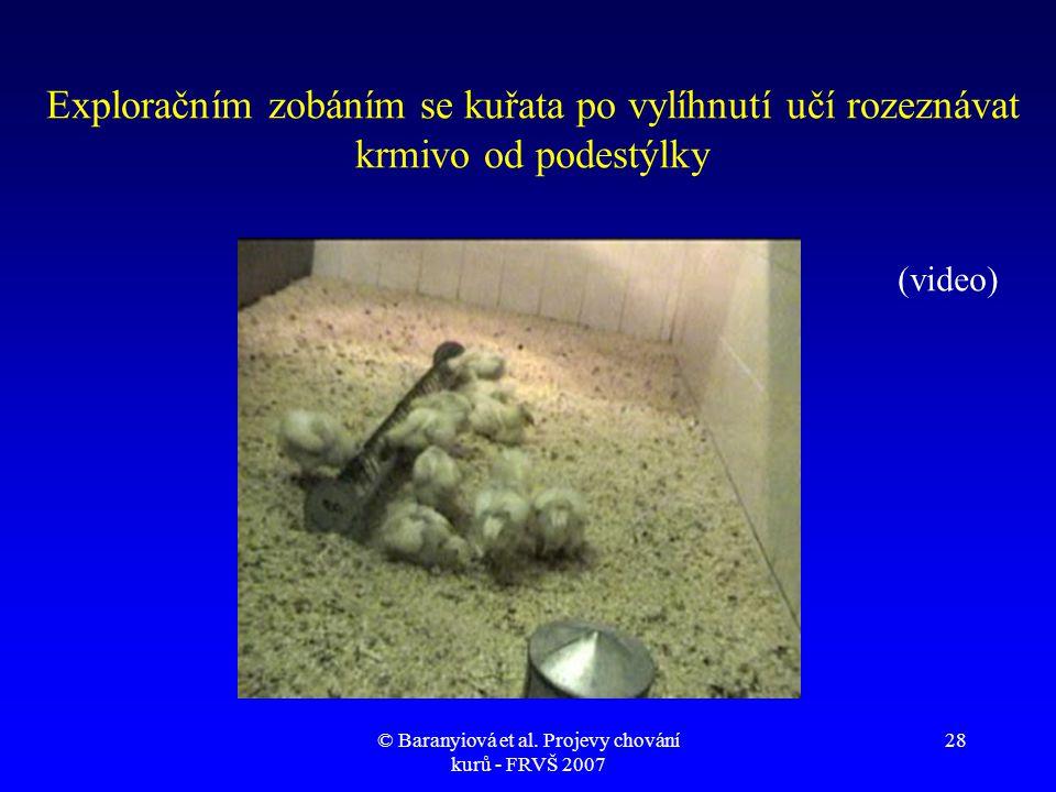 © Baranyiová et al. Projevy chování kurů - FRVŠ 2007 28 Exploračním zobáním se kuřata po vylíhnutí učí rozeznávat krmivo od podestýlky (video)