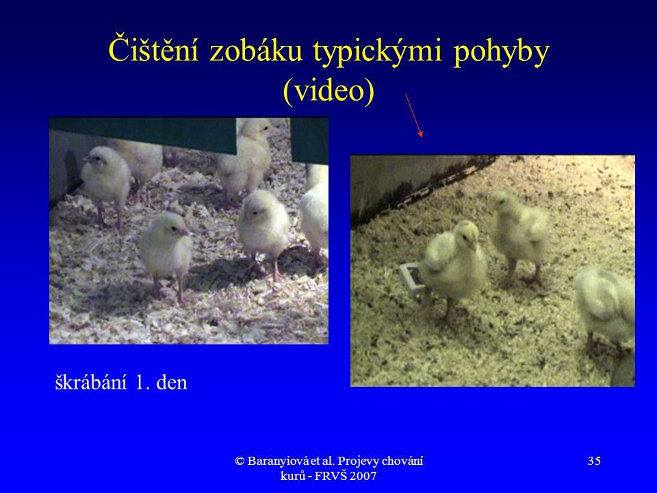 © Baranyiová et al. Projevy chování kurů - FRVŠ 2007 35 Čištění zobáku typickými pohyby (video) škrábání 1. den