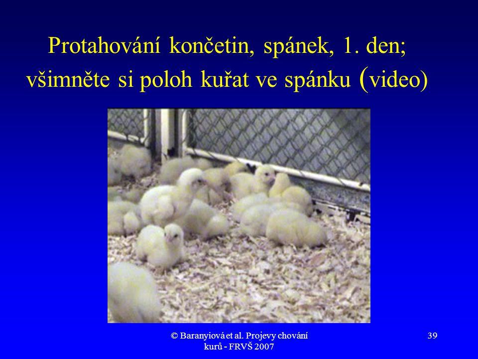 © Baranyiová et al. Projevy chování kurů - FRVŠ 2007 39 Protahování končetin, spánek, 1. den; všimněte si poloh kuřat ve spánku ( video)