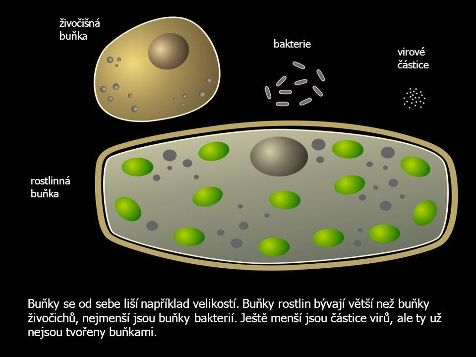 Buňky se od sebe liší například velikostí. Buňky rostlin bývají větší než buňky živočichů, nejmenší jsou buňky bakterií. Ještě menší jsou částice virů