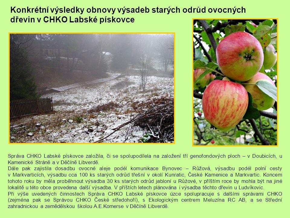 Konkrétní výsledky obnovy výsadeb starých odrůd ovocných dřevin v CHKO Labské pískovce Správa CHKO Labské pískovce založila, či se spolupodílela na za