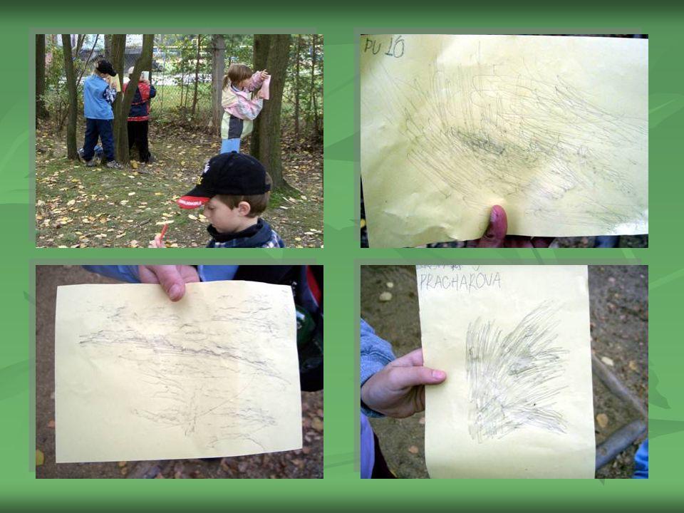 FROTÁŽ KŮRY STROMŮ  Vycházku jsme využili i ke sledování změn listnatých stromů v závislosti na počasí a k výtvarným aktivitám, kdy děti vytvářely fr