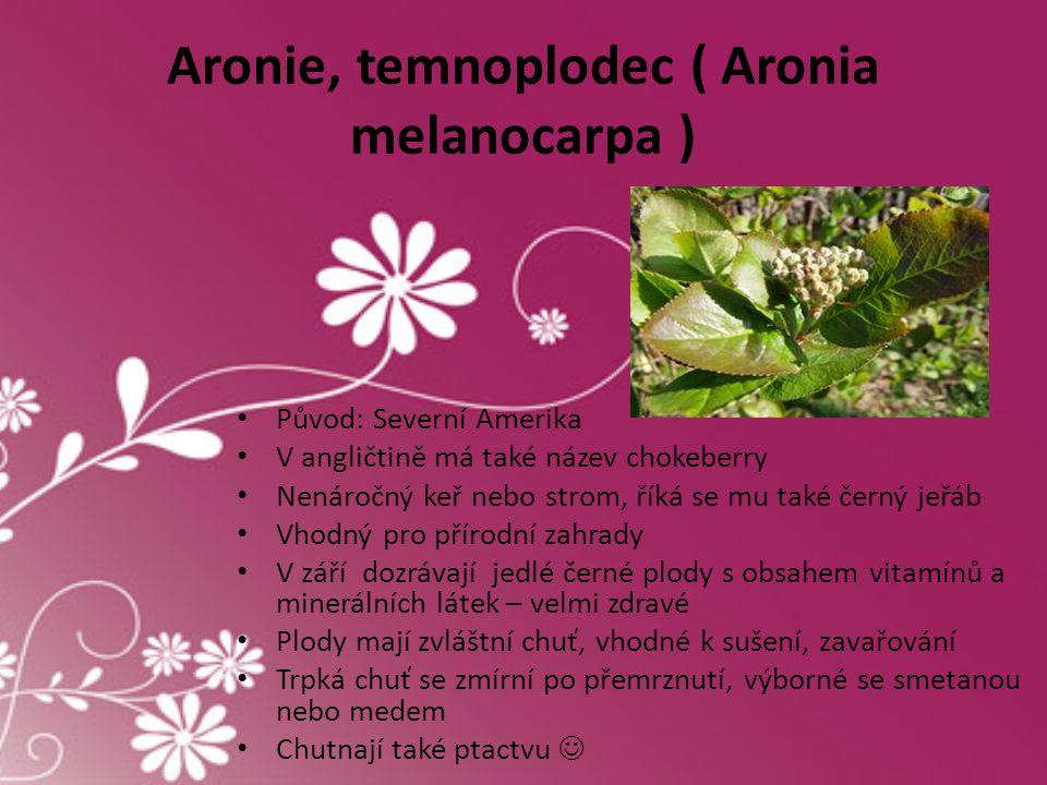 Aronie, temnoplodec ( Aronia melanocarpa ) • Původ: Severní Amerika • V angličtině má také název chokeberry • Nenáročný keř nebo strom, říká se mu tak