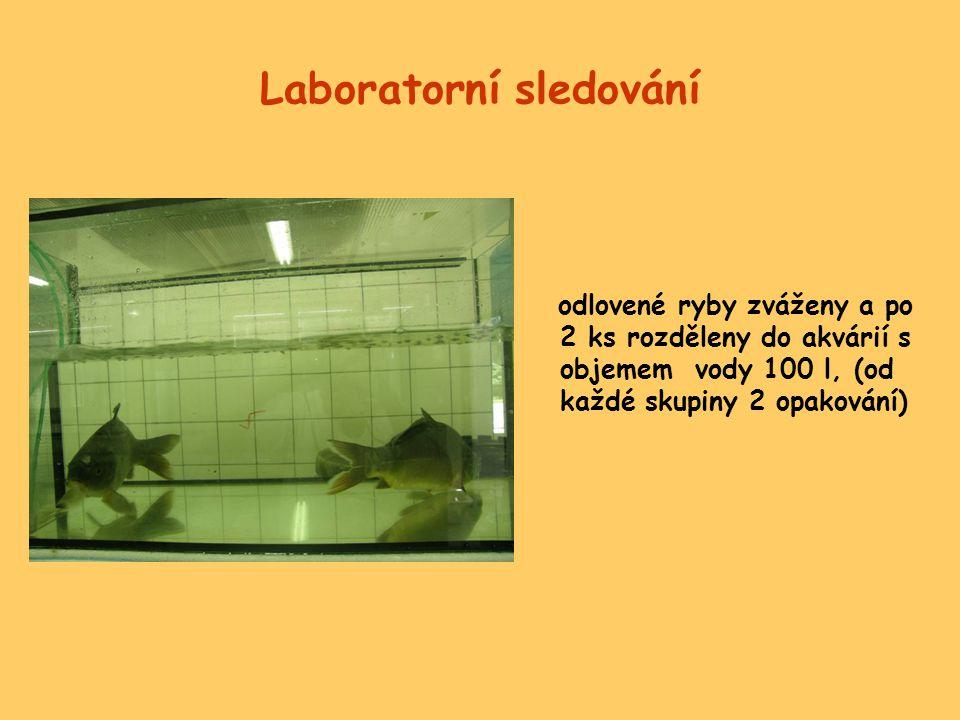 Separace vodné fáze a pevného podílu •po 24 hodinách veškerá voda přefiltrována přes uhelon 40 μm, ryby přeloveny do čisté vody •po dalších 24 hodinách veškerá voda přefiltrována, ryby vráceny do rybníčků
