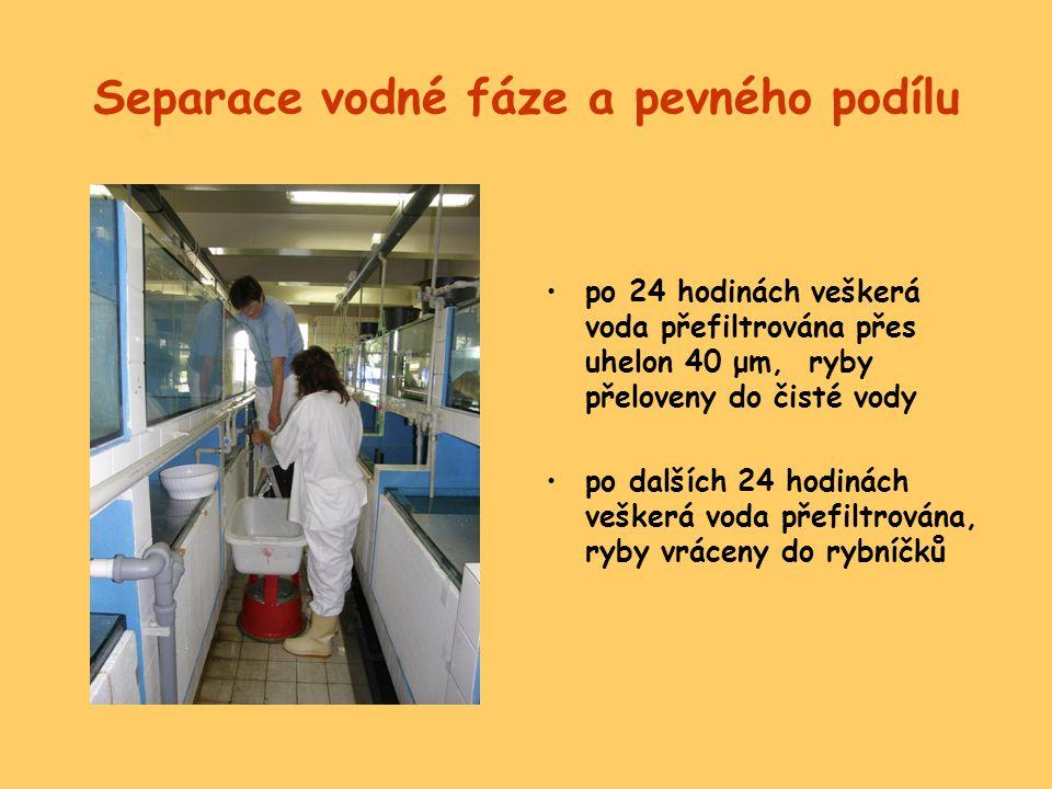 Separace vodné fáze a pevného podílu •po 24 hodinách veškerá voda přefiltrována přes uhelon 40 μm, ryby přeloveny do čisté vody •po dalších 24 hodinác