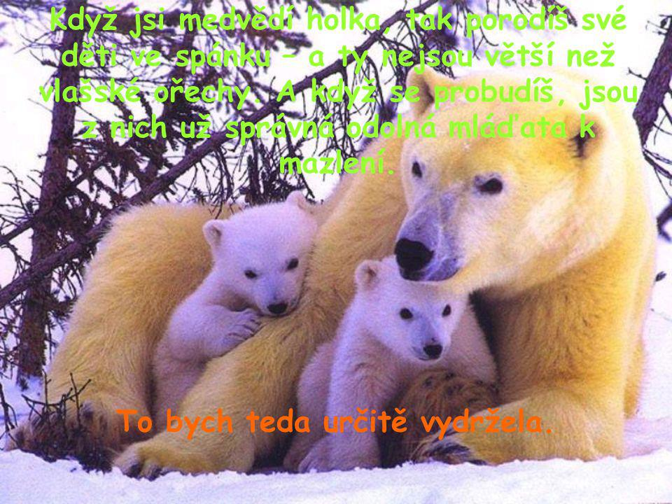 Když jsi medvědí holka, tak porodíš své děti ve spánku – a ty nejsou větší než vlašské ořechy. A když se probudíš, jsou z nich už správná odolná mláďa