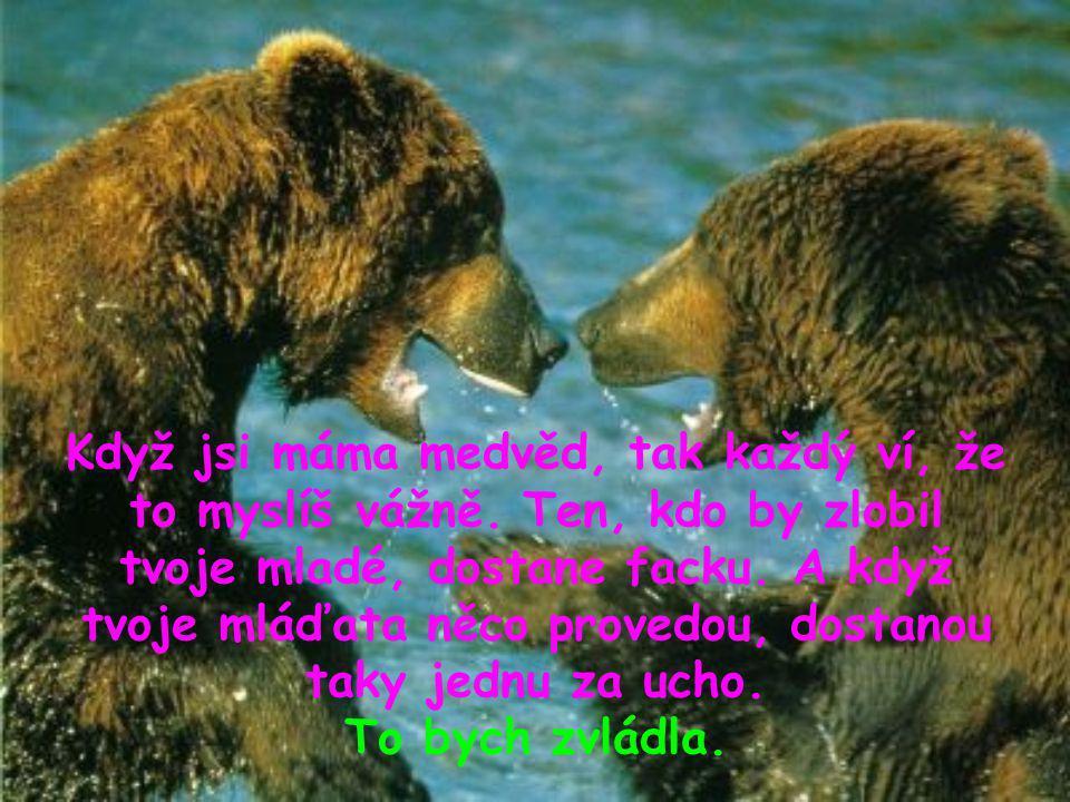 Když jsi máma medvěd, tak každý ví, že to myslíš vážně. Ten, kdo by zlobil tvoje mladé, dostane facku. A když tvoje mláďata něco provedou, dostanou ta