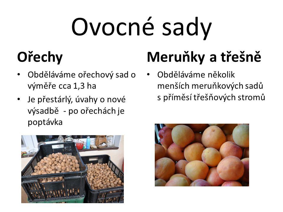 Ovocné sady Ořechy • Obděláváme ořechový sad o výměře cca 1,3 ha • Je přestárlý, úvahy o nové výsadbě - po ořechách je poptávka Meruňky a třešně • Obd