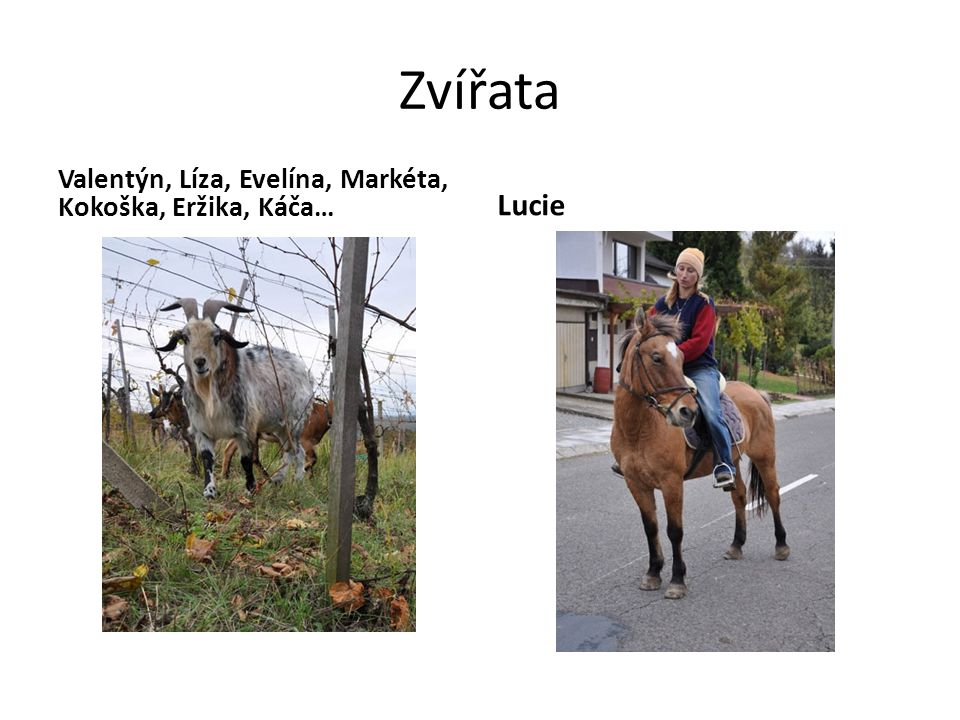 Zvířata Valentýn, Líza, Evelína, Markéta, Kokoška, Eržika, Káča… Lucie