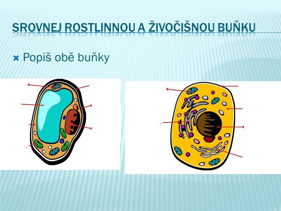  Popiš obě buňky