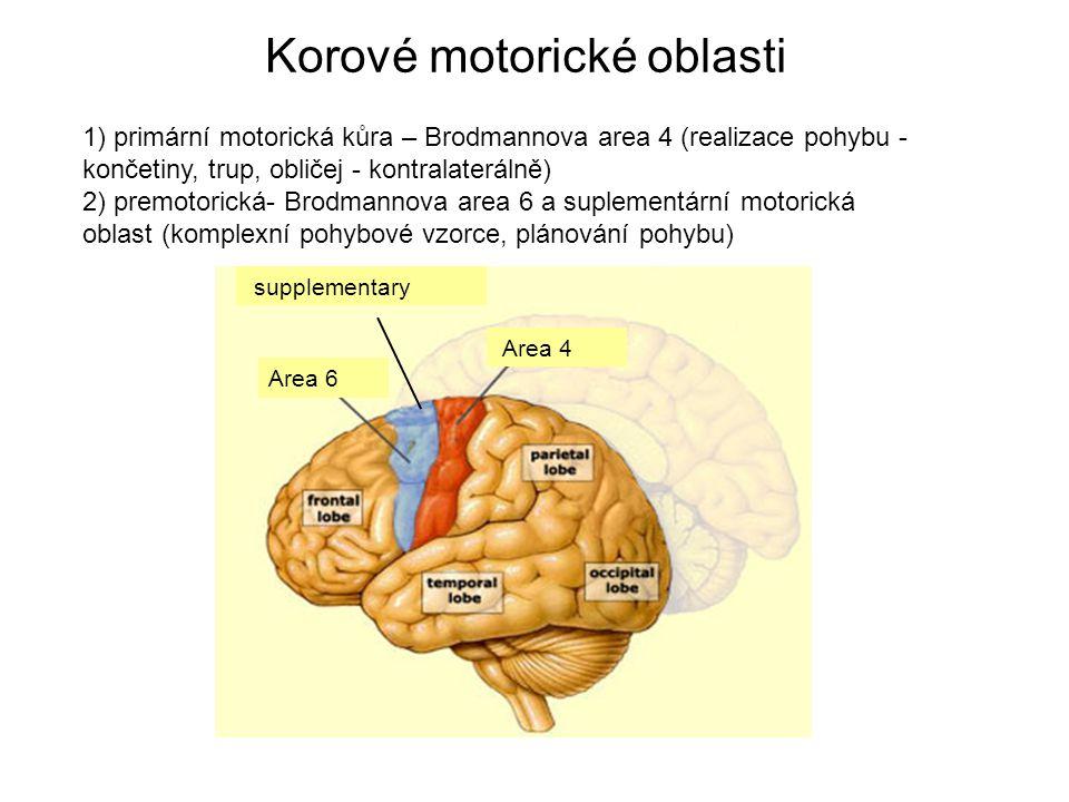 Korové motorické oblasti 1) primární motorická kůra – Brodmannova area 4 (realizace pohybu - končetiny, trup, obličej - kontralaterálně) 2) premotorická- Brodmannova area 6 a suplementární motorická oblast (komplexní pohybové vzorce, plánování pohybu) Area 6 Area 4 supplementary