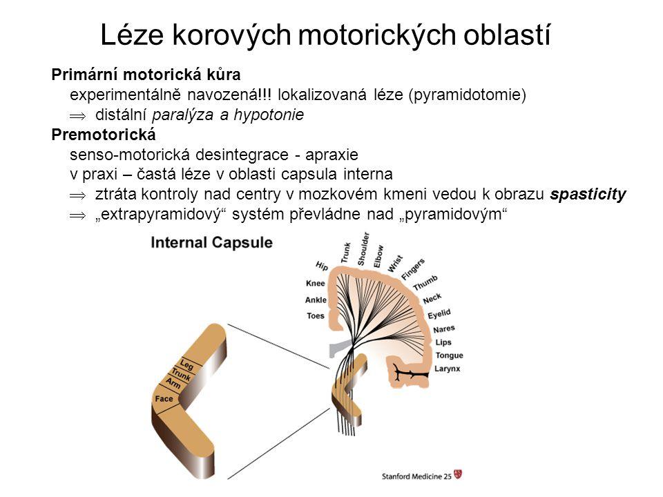 Léze korových motorických oblastí Primární motorická kůra experimentálně navozená!!.