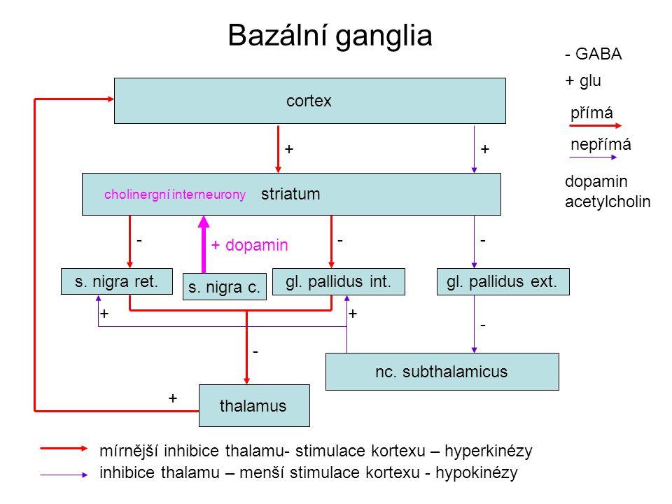 Bazální ganglia cortex striatum + thalamus s.nigra ret.