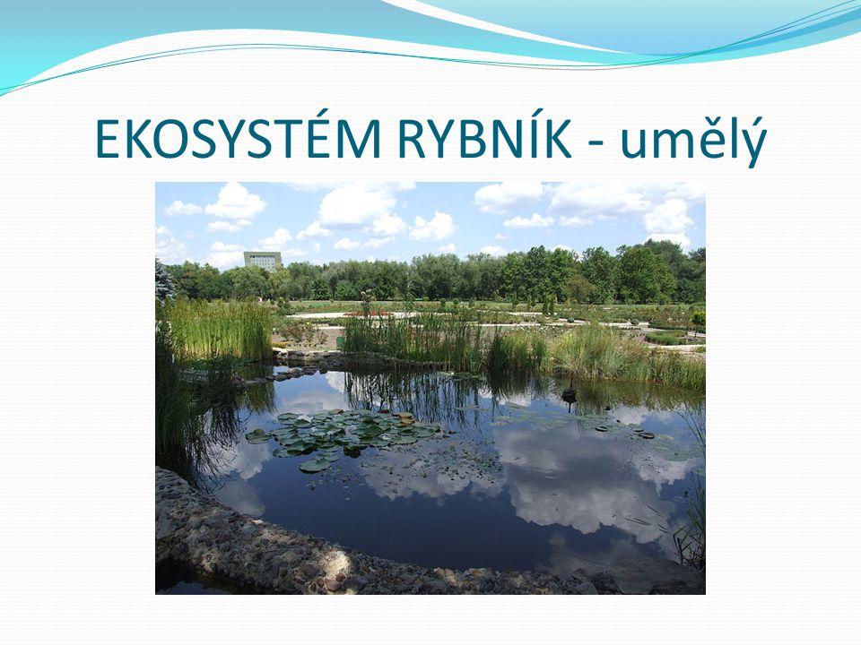 Rostliny v rybníku a jeho okolí vrba bíláorobinec úzkolistýrákos obecný Břehový porost