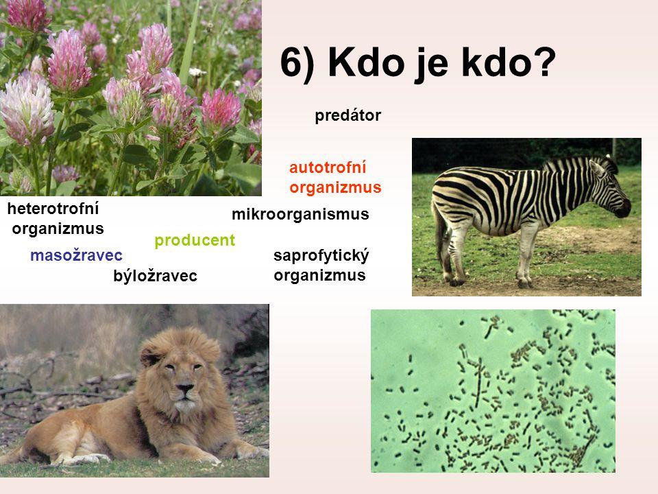 6) Kdo je kdo? producent masožravec mikroorganismus býložravec predátor autotrofní organizmus heterotrofní organizmus saprofytický organizmus