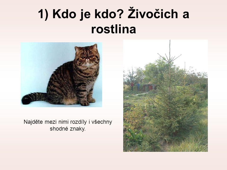 1) Kdo je kdo? Živočich a rostlina Najděte mezi nimi rozdíly i všechny shodné znaky.