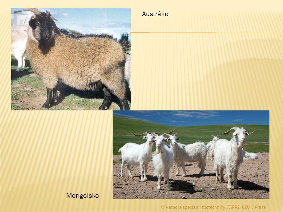 Austrálie Mongolsko © Katedra speciální zootechniky, FAPPZ, ČZU v Praze